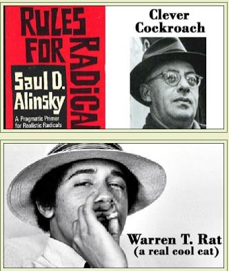 Rat copy